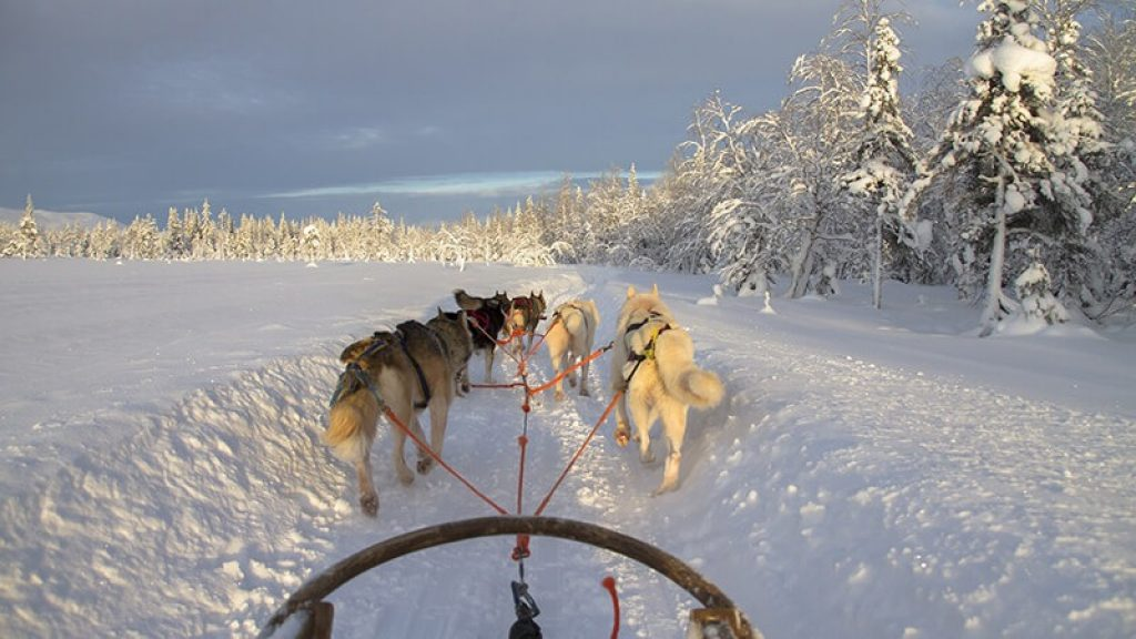 Huskysafari in Lapland